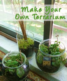 MAKE YOUR OWN TERRARIUM...this is a great site for terrarium info, everything from using the proper plants, watering schedules, and soil mixtures...
