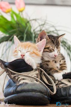 Cuteness overload  --- kitty cat shoes sleeping amazing ♥♥♥♥