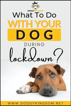 What to do with your dog during lockdown, Puppy, dogs and puppys, pet dogs, dog love, cute dogs, dog lovers, my dog, babie dogs, dogs puppys, love that dog, i love dogs, dogs, little dogs, best dogs, fun dog, old dogs, adorible dogs, cute dog picturs, cute dogs and puppies, i want a dog, puppys dogs, beautiful dogs, dog in heaven, dog lick, pretty dogs, dog rescues, pets dogs puppies, dogs huskys, guilty dogs, spotted dogs, dog cuddles, fluffi dogs, tiny dog, cuddly dogs, frenchton dogs Love Pet, I Love Dogs, Frenchton Dog, Dog Cuddles, Spotted Dog, Tiny Dog, Dog Heaven, Guilty Dog, Cute Dogs And Puppies