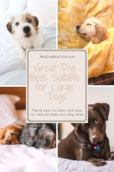 11 Top 10 Best Dog Pillows in 2019 images