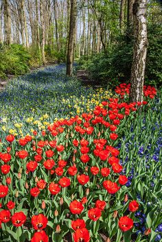 tulipnight