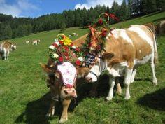 Heart Of Europe, Maids, Homeland, Austria, Blog, Animals, Farmers, Autumn, Animales