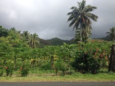 Plantations all along the roadside makes for a nice stroll