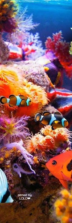 """( Great Barrier Reef) * * CLOWN FISH: """" It's a sad day to hear dat de Great Barrier Reef iz in trouble. De coral be dyin'. """""""