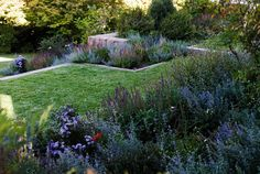 nicolás sánchez, paisajista / jardín alto claro, chile