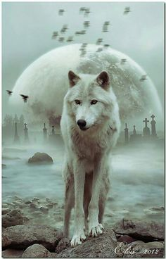 Wolf totem: Loyalty Cunning Generosity Intelligence Friendliness Compassionate Communication Totem wolf symbols belong to those who truly understand the depth of passion that belong to this noble creature. The Wolf is a representative of deep faith, and p Artwork Lobo, Wolf Artwork, Beautiful Wolves, Animals Beautiful, Cute Animals, Wild Animals, Wolf Love, Wolf Pictures, Animal Pictures