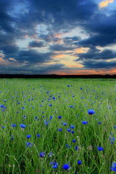 The evening silence... by Dovydas Cicėnas on 500px