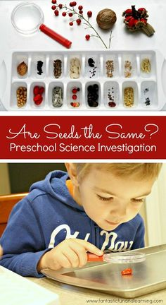 Are Seeds the Same Preschool Science Investigation. Spring science activity for preschool and kindergarten. Science Montessori, Kindergarten Science, Science Activities, Science Projects, Activities For Kids, Science Centers, Science Experiments, Fall Preschool Science, Tiny Seed Activities