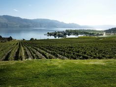 A vineyard a day as long as you stay! Why I miss B.C.    Kelowna, British Columbia