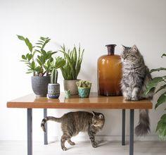 Urban Jungle Bloggers: Jungle Animals by @jtdesignNL