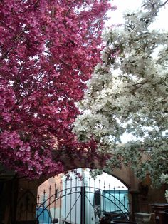 Spring in Old Town Fort Collins #MoveToFortCollins www.realfortcollinsagent.com