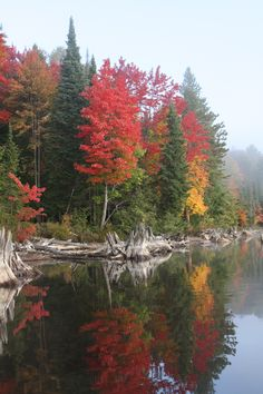 Fall colours in Algonquin Provincial Park. Pictures To Paint, Cool Pictures, Ontario Parks, Algonquin Park, Forest Bathing, Parks Canada, Water Reflections, Canada Travel, Summer Travel