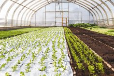 Sorrin Puutarha - blogissa paljon kuvia!  #salaatti #maatila #puutarha #sorri #terveellinen #ruoka
