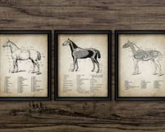 Image result for DIY equestrian DECOR
