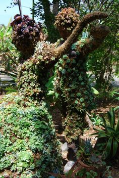 Succulent Topiary, created by Pat Hammer, Director of Operations of the San Diego Botanical Garden. Image ©Inspiration Green.
