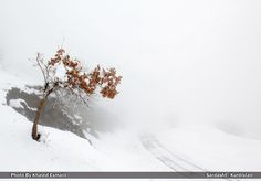 Misty Winter! by Khaled Esmaili on 500px