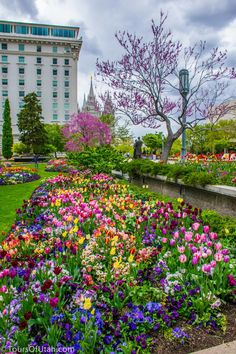 Temple Square Gardens in Salt Lake City, Utah. I love these gardens. They're gorgeous all year round, including Christmas!