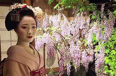 maiko-mamefuji-insta-20150421.png (635×420)