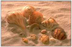 I love collecting shells