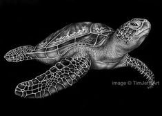 Green Sea Turtle Ink Drawing. Signed by Artist by TimJeffsArt, $150.00