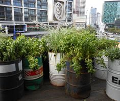 Oil barrel planters at Joost Bakker's Greenhouse, Melbourne Melbourne Architecture, Architecture Design, Modern Plant Stand, Plant Stands, Oil Barrel, Tiered Garden, Barrel Planter, Oil Drum, Pot Plante