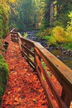 Oregon. Oh! Where in Oregon?-looks like McDowell creek park/falls trail to me...