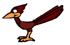 12 Mejores Imágenes De Pájaros Carpinteros Beavers Woodpeckers Y Draw