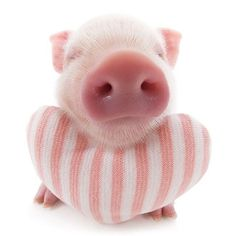 Artlist Collection THE PIG — Did you know? Today is national pig day!