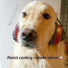 One of the drawbacks to tiny house living is that the smoke alarm goes off for almost any reason. Simply baking a chicken can make it chime loudly. I hide behind mom and BooBear runs to his crate. Mom runs to hit the off button rescuing our sensitive dogg