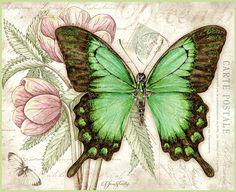 Jane Shasky / Butterflies / December 2015