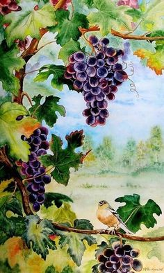 Valevskaya Valentina Mihaylovna - 'Finch and Grapes' Grape Painting, Fruit Painting, China Painting, Silk Painting, Watercolor Paintings, Watercolors, Watercolor Fruit, Vides, Wine Art