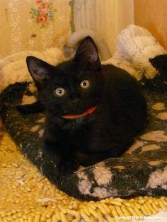 ACTU Animaux - Ébène et ses 4 chatons promis à l'euthanasie : un sauvetage de l'été