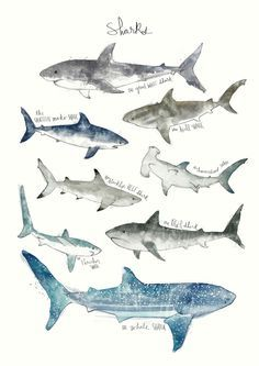 """bestof-society6: """" ART PRINTS BY AMY HAMILTON • Whales • Arctic & Antarctic Animals • Foxes • Dinosaurs • Sharks Also available as canvas prints, T-shirts, tapestries, stationery cards, laptop..."""