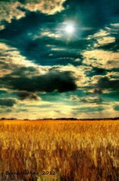 Wheat Field Sunset