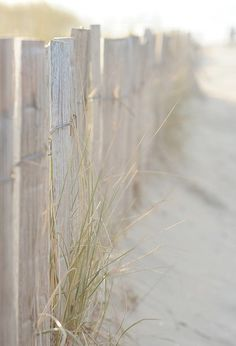 Fence line at the Beach