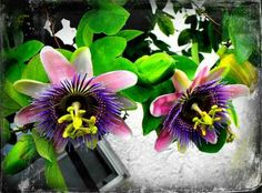 Exotic Plants and Flowers that you can Grow in any climate