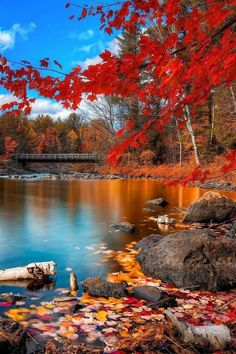 Wonderful Northern California fall colors