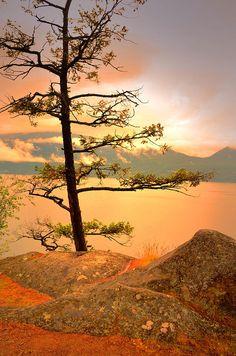 Lone Tree and glowing orange view of Okanagan Lake, Ellison Provincial Park, Vernon BC, by Tara Turner Wonderful Places, Beautiful Places, Vernon Bc, Nostalgia, Lone Tree, Canada, Ciel, British Columbia, Natural