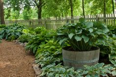 Image result for hosta plant companions