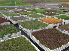 container gardening on a commercial roof