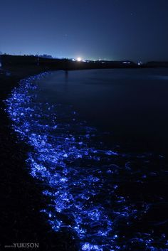 The Blue Light of Firefly Squids, Toyama, Japan