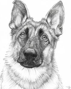 $28 German Shepherd Dog