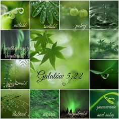 Joy, Nature, Poster, Lime, Bible, Green, Soothing Colors, Polish, Naturaleza