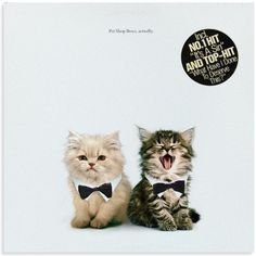 PET SHOP BOYS - actually cover    CATUALLY   LOL  ;)    www.thekittencovers.tumblr.com