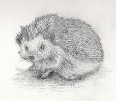 How To Draw A Realistic Hedgehog | www.pixshark.com ...