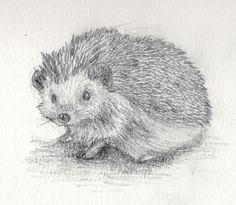 Hedgehog Drawing | hedgehog by filipissima traditional art drawings animals 2012 2014 ...