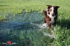 Summer Fun for Rural Dogs: Irrigation! | Kama ❤️️s Agility