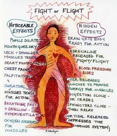 Fight or Flight: Mindfulness/Mind-Body Approaches - Trauma-Informed Practices and Expressive Arts Therapy Institute Trauma Therapy, Therapy Tools, Therapy Ideas, Play Therapy, Speech Therapy, Therapy Journal, Fight Or Flight Response, Beta Blockers, Art Therapy Activities