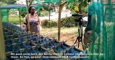Afrique du Sud : cultiver ses légumes dans des sacs plastiques pour nourrir les townships