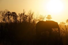Sunset with elephant's silhouette: http://sothebysrealty.ca/blog/en/2016/07/20/from-wine-tours-to-safaris-a-72-hour-guide-to-niagara-falls-ontario/ #realestate #design #lifestyle
